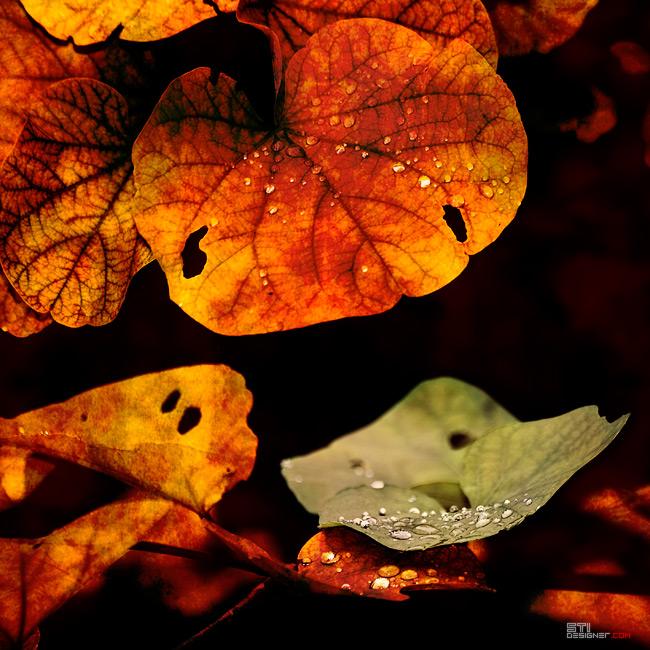 Светослав Иванов цветна фотография на есенни листа