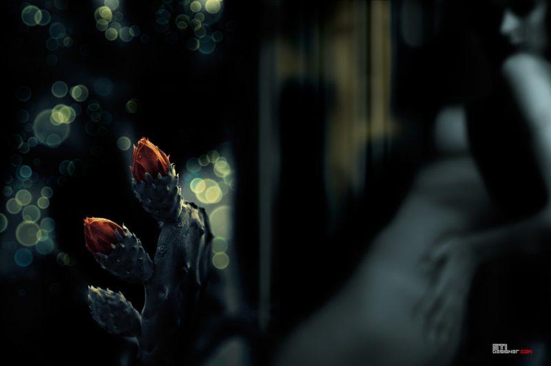 Светослва Иванов - Цветя на злото, експериментална и мрачна фотография