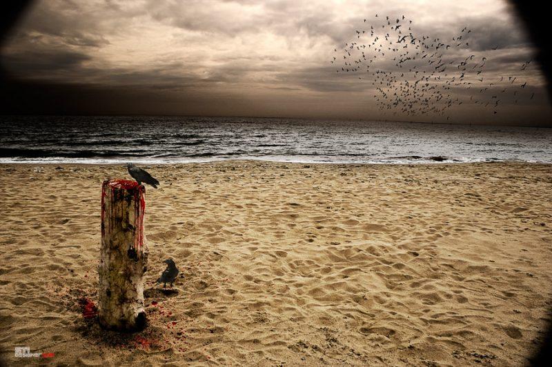 Светослав Иванов - Последното дърво, експериментална и мрачна фотография